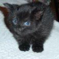 fluffycat1